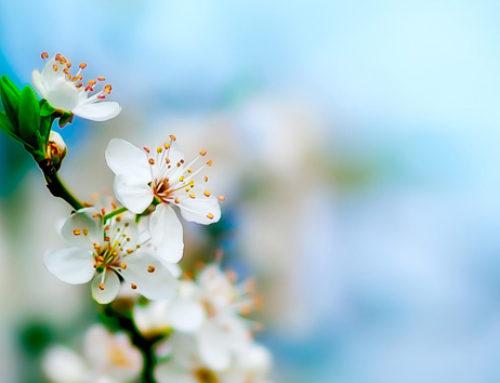 È arrivata la primavera